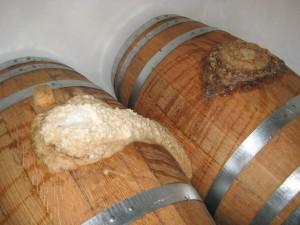 Lambiek fermenting at Toon van den Broek - lambicblenders.wordpress.com