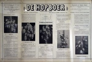 The lost hops of Belgium: Groene Bel, Coigneau, Witte Rank... Collection Hopmuseum Poperinge.